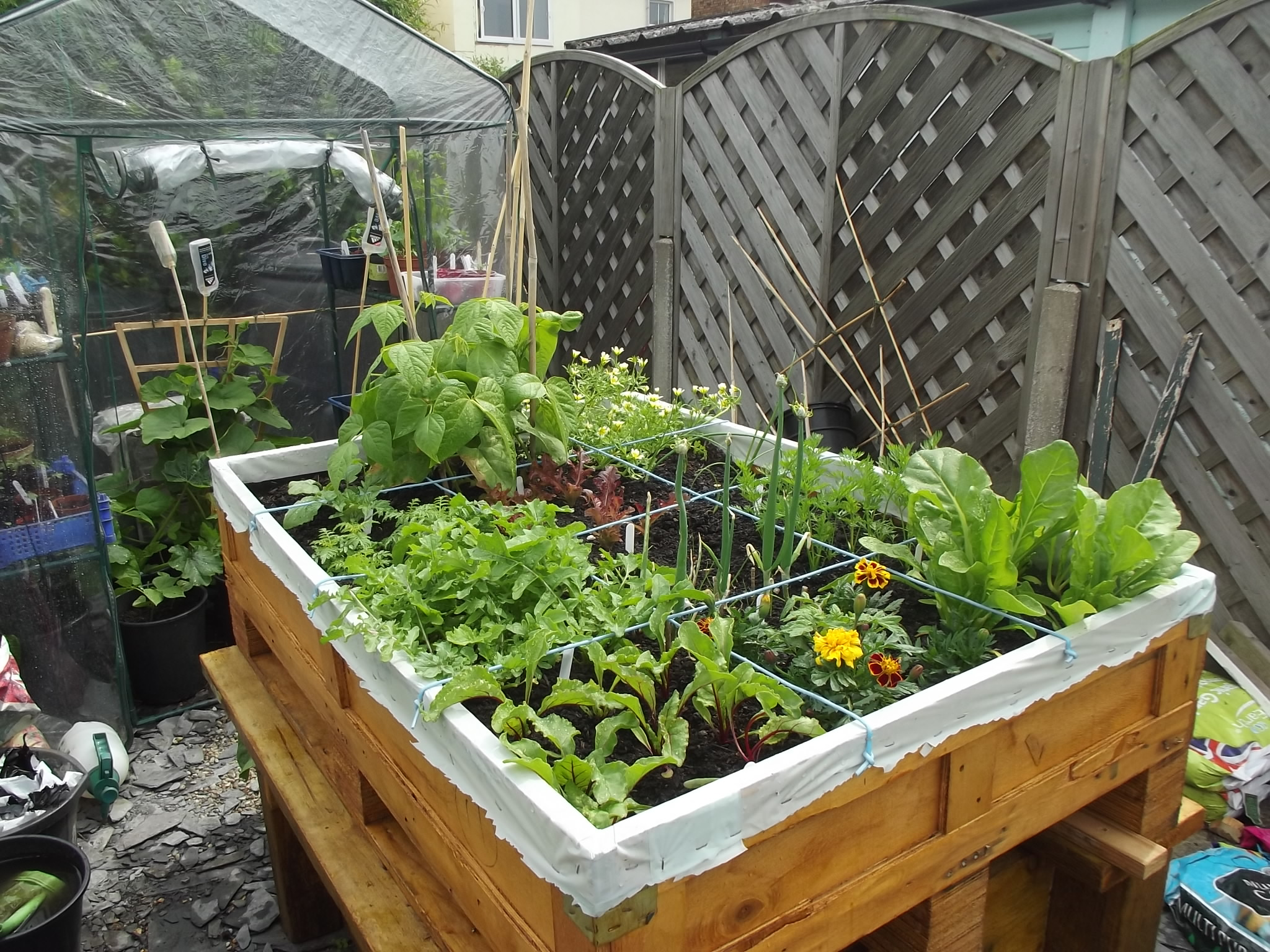 container veg growing