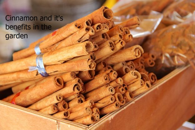 cinnamon and it's benefits in the garden..