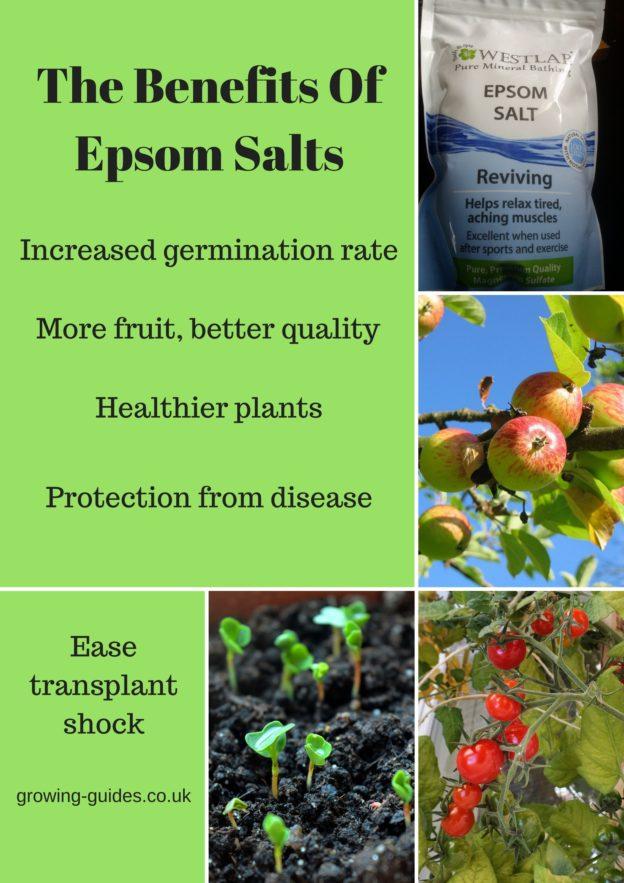 Epsom Salts Gardening Uk Garden Ftempo