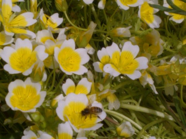 Growing plants for pollinators and why it's important