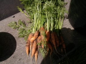 don't waste good food carrot tops