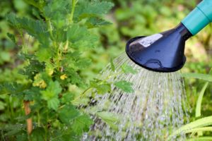 the number one secret to growing great plants - watering
