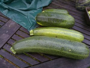 the 5 easiest vegetables to grow in containers, courgettes (zucchini)