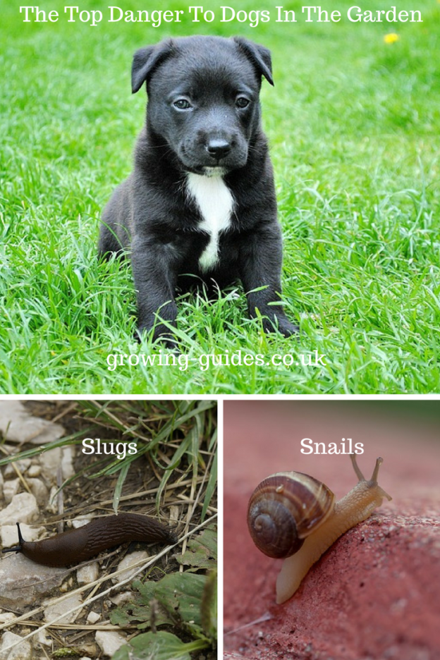 The Top Danger To Dogs In The Garden