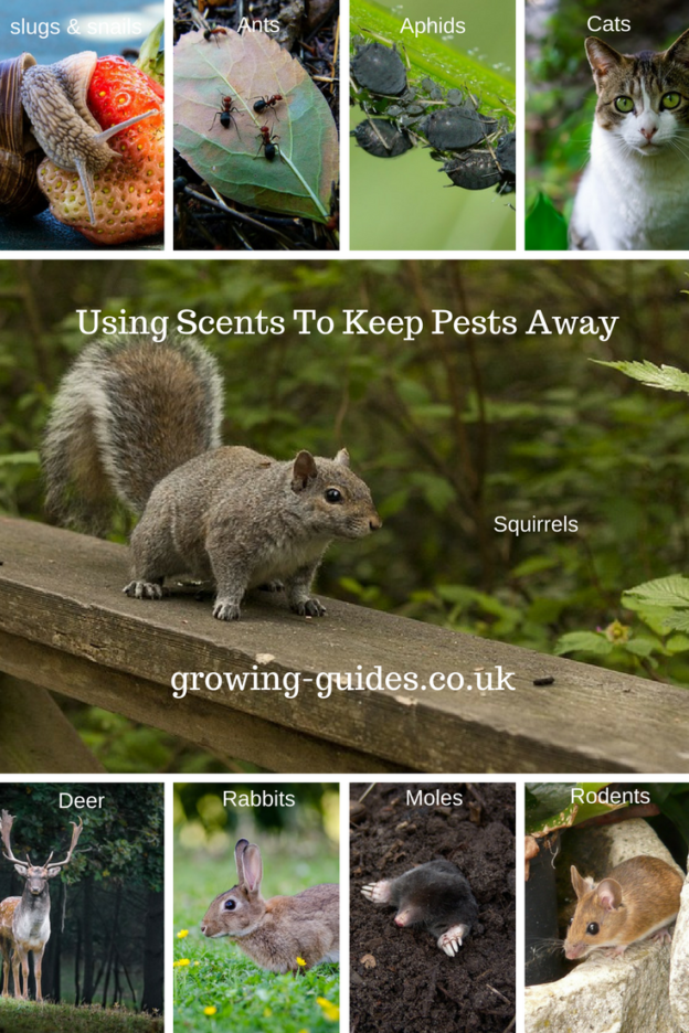 Using Scents To Keep Pests Away