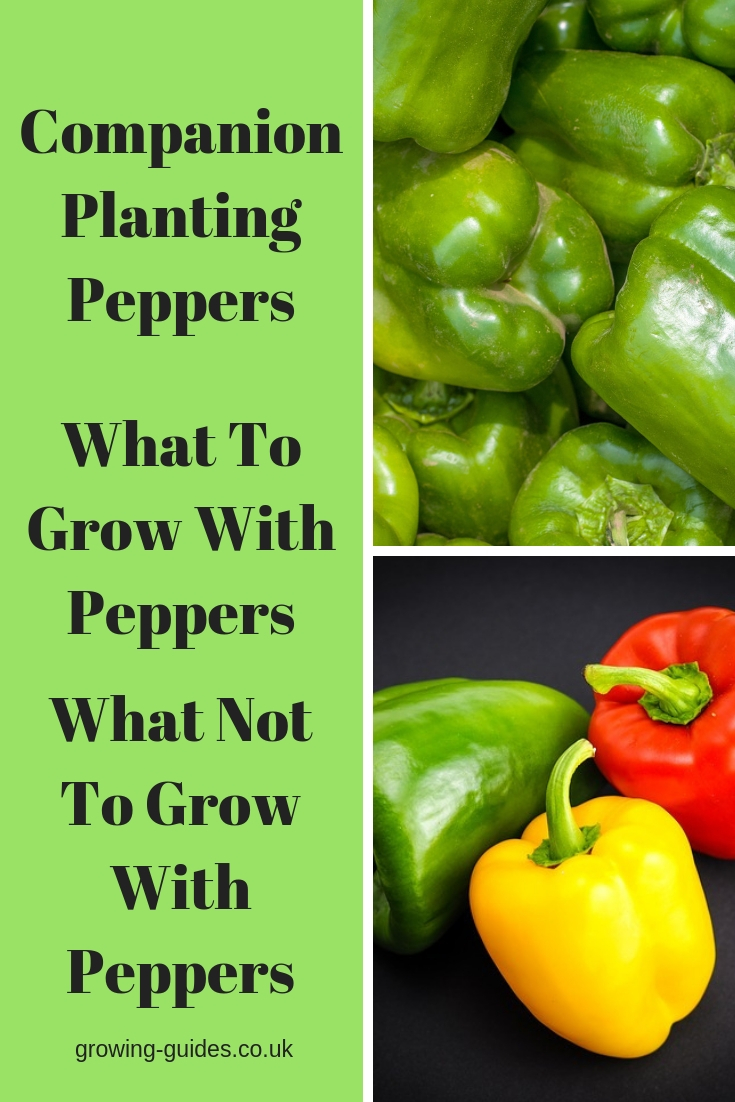 How to Grow Bell Pepper (High Value Crops)